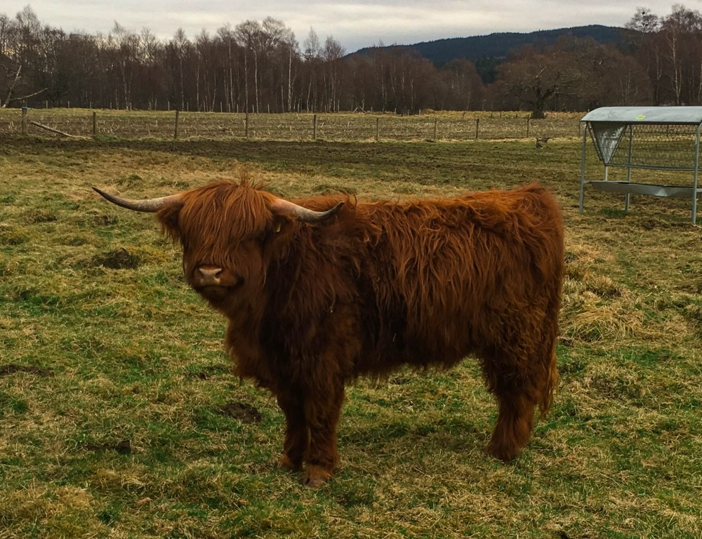 Scottish Highlands-8138