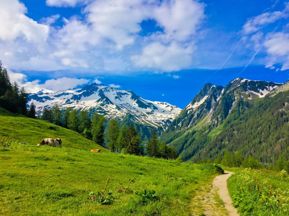 The Alps-1693