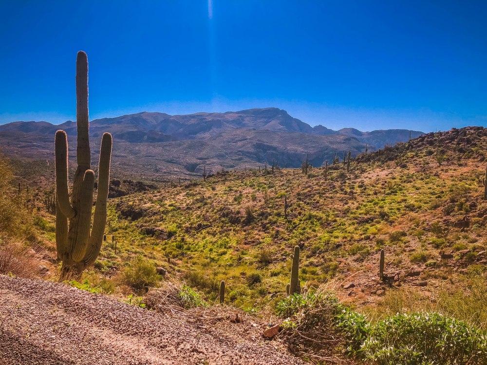 Phoenix - Part 1 -7492